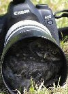 Hiding within camera range of an owl